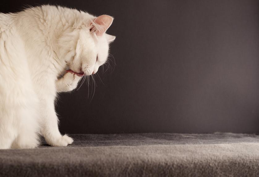 Et puisque la griffe du chat a besoin d'être « faite », autant donner de quoi à votre chat…
